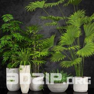 3D Plant Model 10 free download