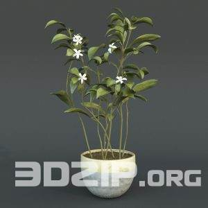 3d plant Model 36 free download