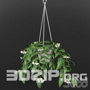 3d plant Model 34 free download