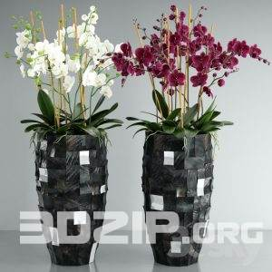 3d plant Model 88 free download