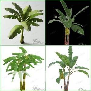 3d banana tree Model 98 free download