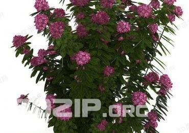 3d plant Model 151 free download