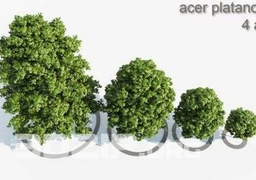 Free 3D Models Trees by Krzysztof Czerwinski