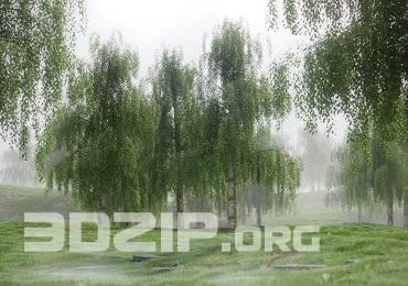 Free High quality 3D models Birch Tree Pack