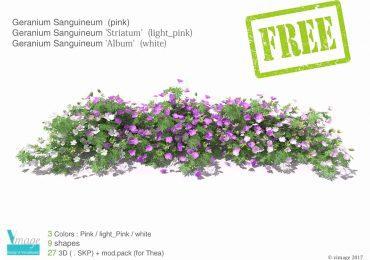 Free 3D Model Geranium Sanguineum from Vimage Visualisation