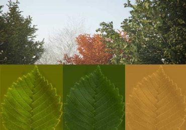 Tree Model & Seasonal Leaves from XOIO