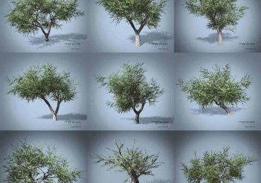 Free 3d Olive Trees from Merêces Arch-Viz – 3D Visualization Studio