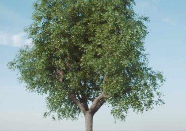 Free 3d model Single Tree Model-Fstorm from Archvizscenes