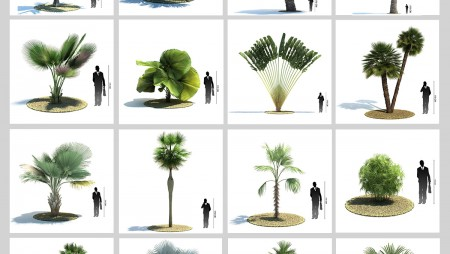 Palm-Sketchup-free-download-450x254 - 3Dzip ORG - 3D Model Free Download