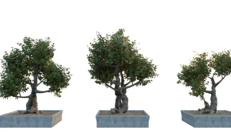 Bonsai-3D-Models