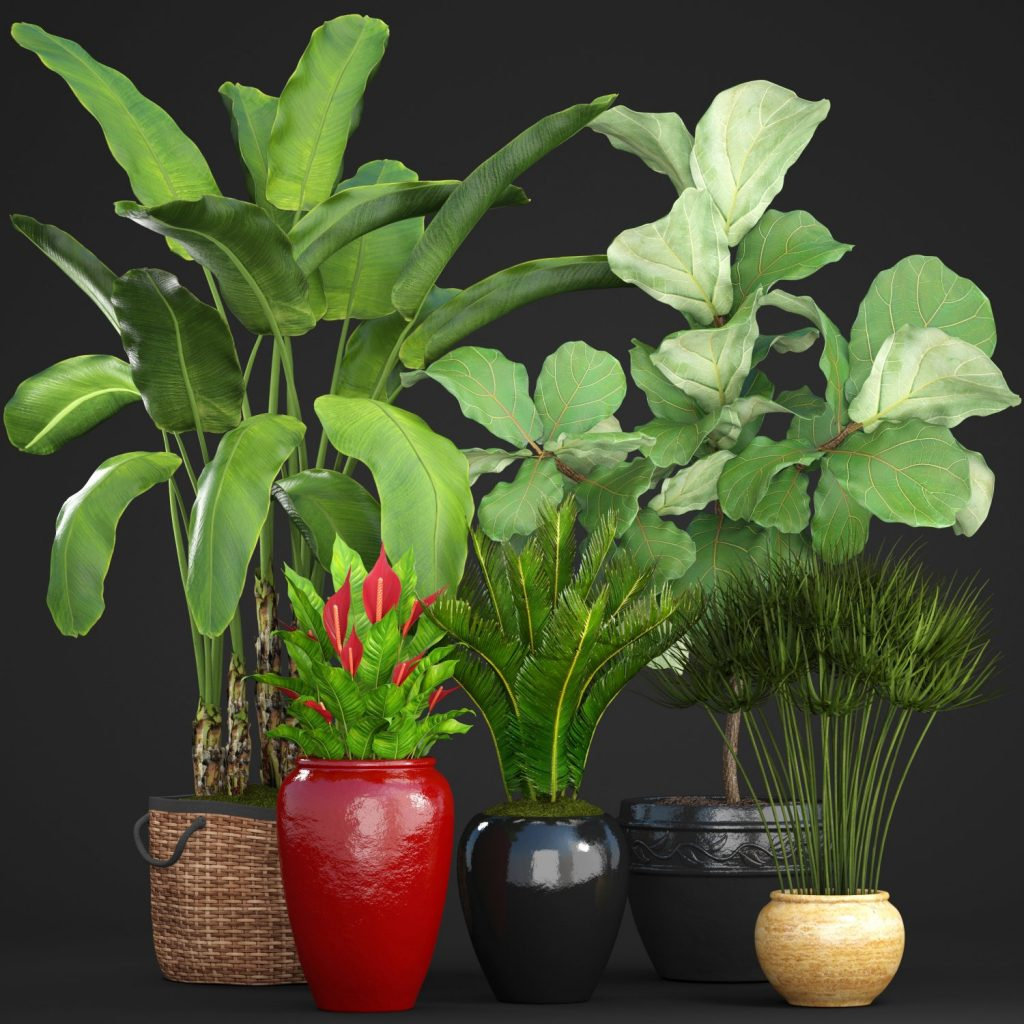 3d Plant Model 203 Free Download