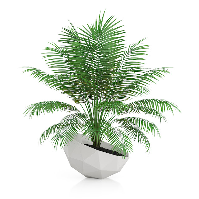 3d Plant Model 245 Free Download