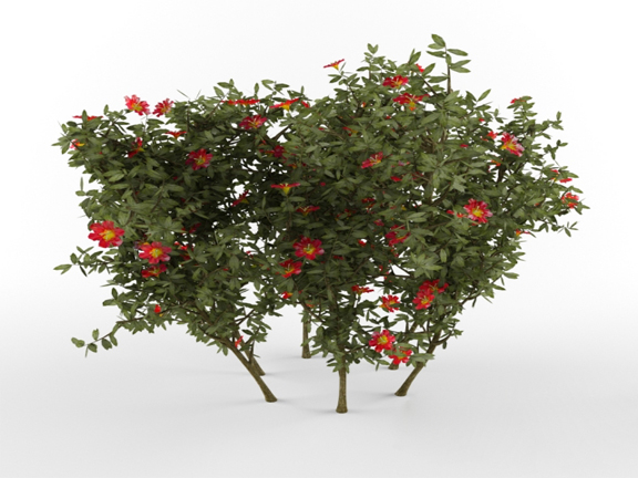 3dSkyHost: 3d Plant Model 253 Free Download
