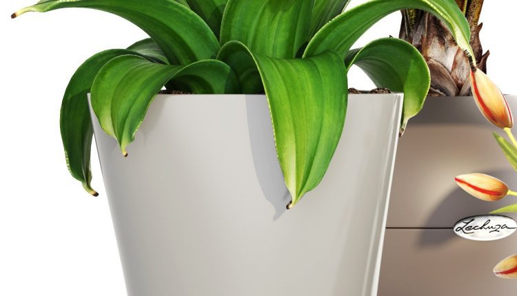 3d Plants Model 281 Free Download 2