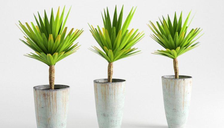 3d Plants Model 287 Free Download 3