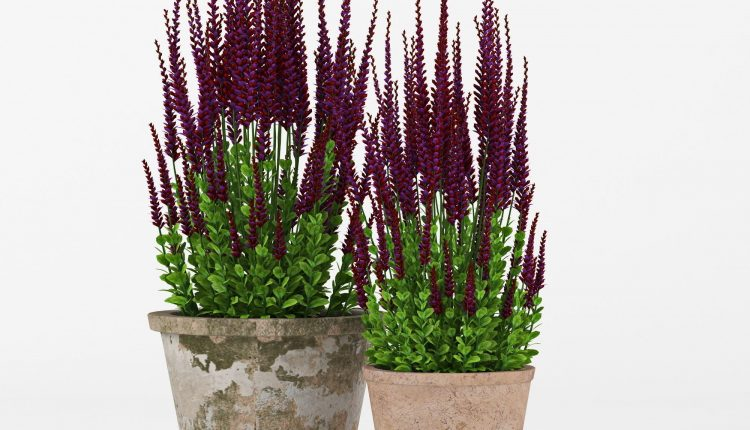 3d Plants Model 313 Free Download 1