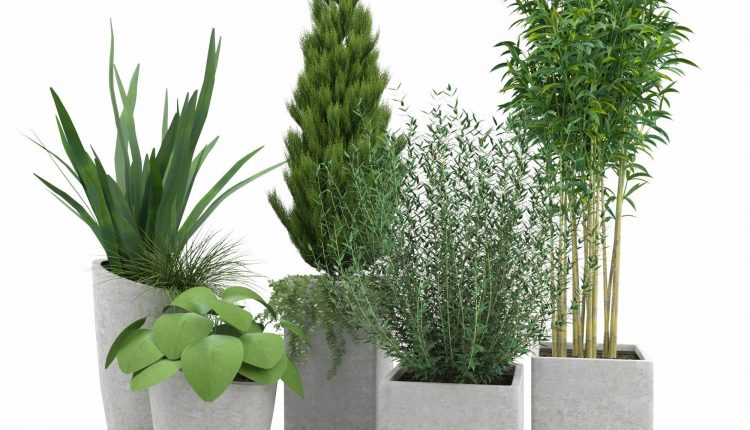 3d Plants Model 315 Free Download 1