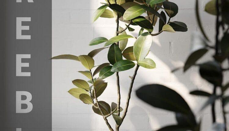 3d Plant Model 411 Free Download By Héctor Diez